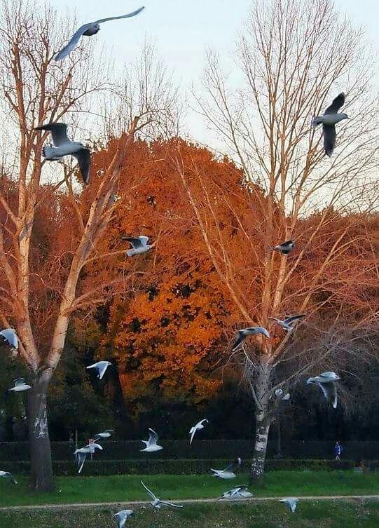 Tramonto con gabbiani al parco delle Cascine. Fi.