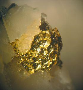 Or natif d'une veine hydrothermale grise de quartz dans les roches vertes ou métagabbros néo-archéens d'environ 2,729 milliards d'années du bouclier canadien, Mine Bisset, Sill San Antonio, lac du Riz au sud-est du Manitoba. Grossissement sur 3 à 4 mm.