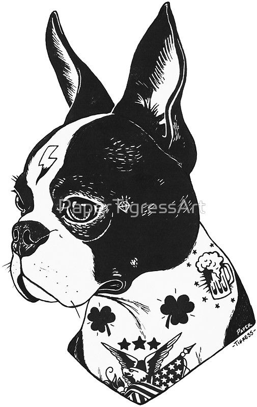 boston terrier how to draw