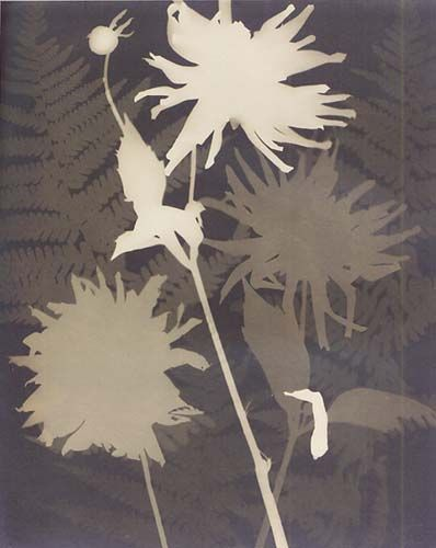 Man Ray, Untitled (rayograph with flowers and ferns c. 1922)