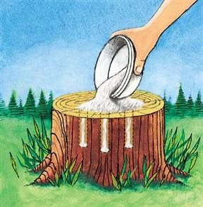 Get rid of tree stumps by drilling holes in the stump and filling them with 100% Epsom salt. Follow with water, and wait. Live stumps may take as long as a month to decay, and start to decompose all by themselves.