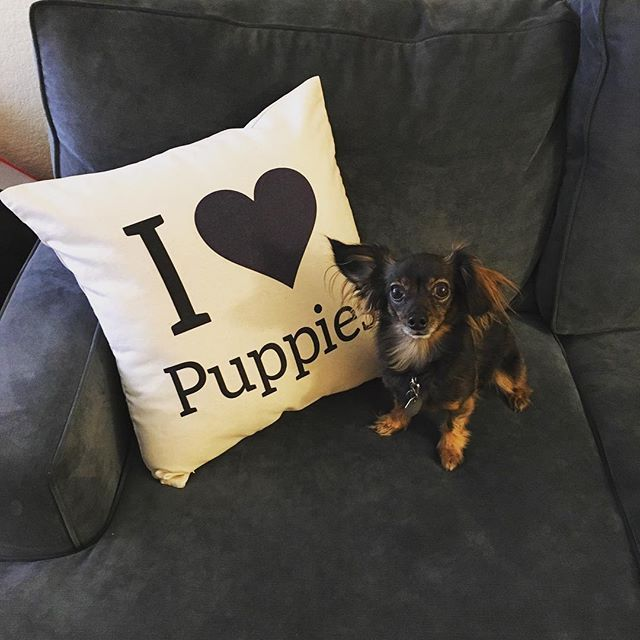 Even your pet needs his or her own Canvas Signature Pillow. (IG: lincoln_kirk)