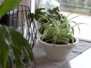 Les plantes dépolluantes : ma petite sélection personnelle ! • Hellocoton.fr