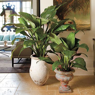 17 best plantas purificadoras de aire images on pinterest for Nasa indoor plant list