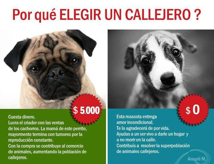 perros mestizos vs perros de raza - Buscar con Google
