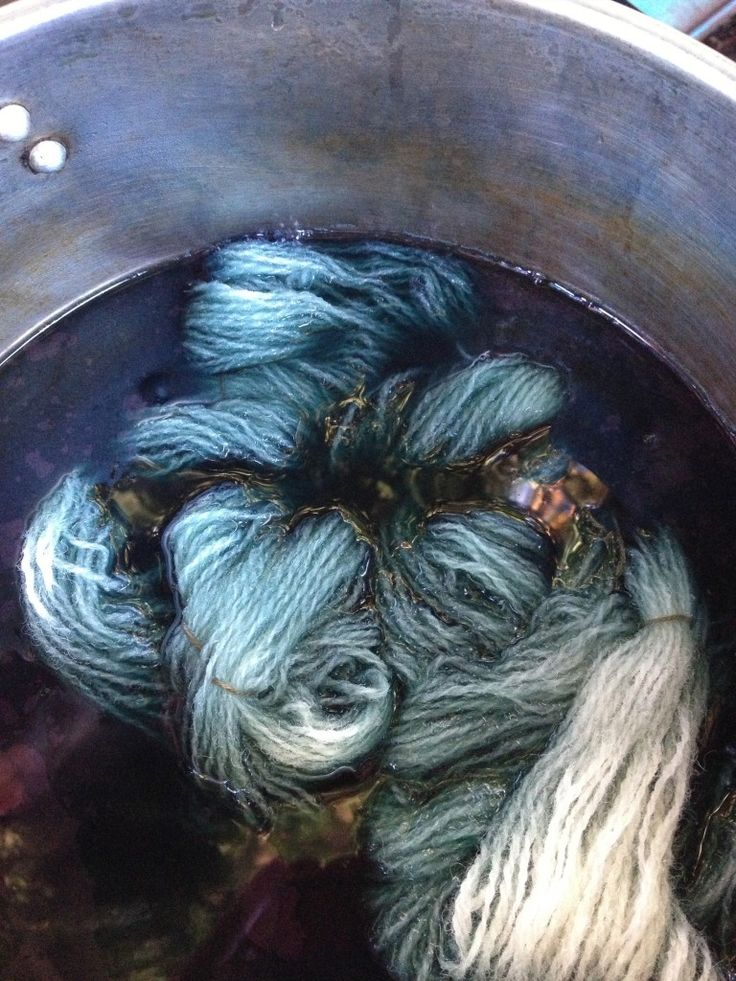 Growing the Color Blue | Chickweed Patch - her Japanese indigo photo looks like knotweed with more leaf.....