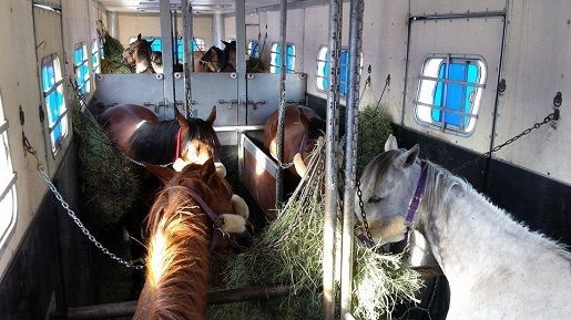 Commercial Horse Transportation: Understanding a Bill of Lading - LINK to a good article about shipping