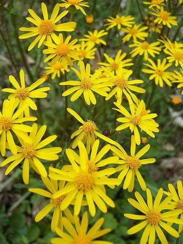 48 best native plants