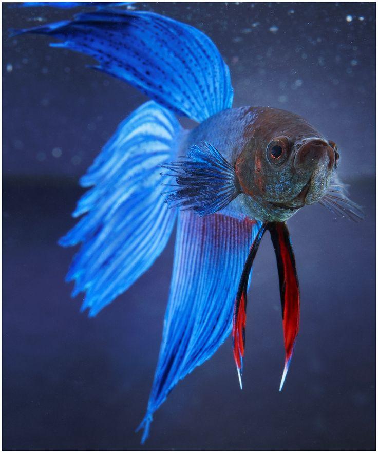 38 Best Freshwater Aquarium Images On Pinterest