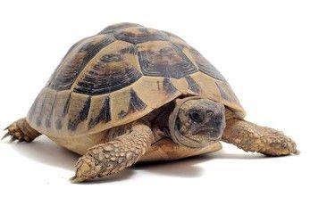 image tortue - Recherche Google
