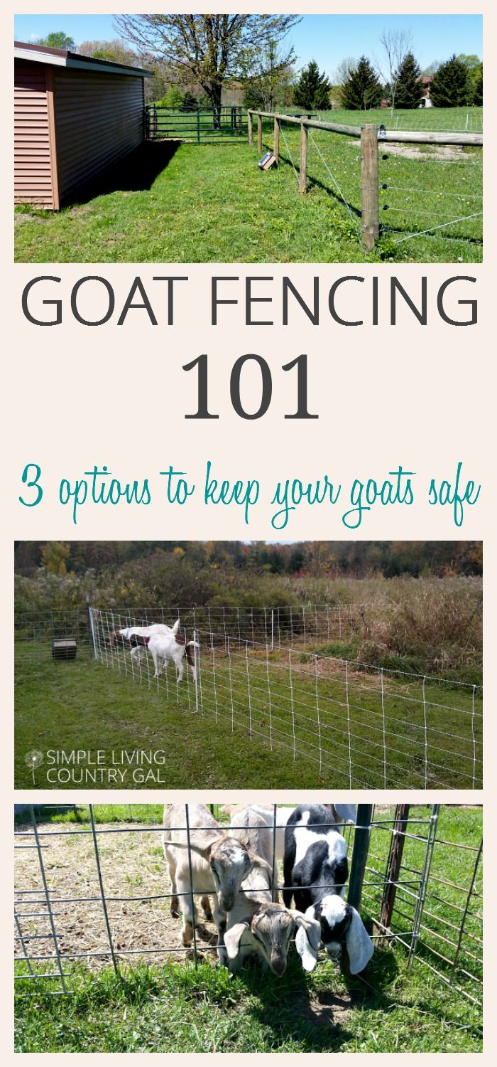 Just starting out on your goat raising journey? Read my tips on my top three goat fencing options to find out what to use when and why. via @SLcountrygal