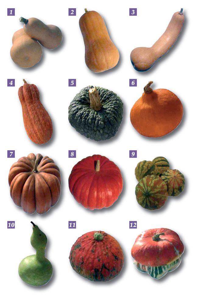 zucca coltivazione e raccolta - Cerca con Google