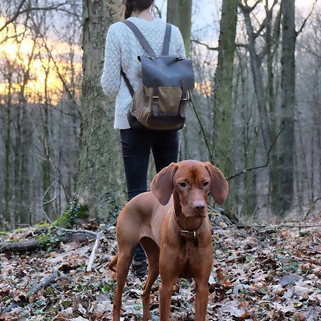 Our backpack and dog collar with @hi_kristin and pup is everything we ❤️ right now. #regram #myscaramanga .  .  .  .  #berlinbloggers #bloggers #adventure #travel #canvasback #outdoors #gooutside #winter #dogs #dogcollar #hike #wilderness #sky #collaboration #styleblogger