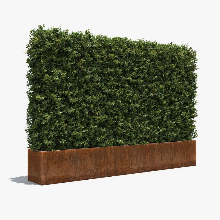 3D max plant boxwood planter pot model 3д модель растения самшит куст кустарник   живая изгородь plant box shrub garden topiary park bush nature foliage leaf landscape boxwood buxus architecture visualization exterior green rust steel metal