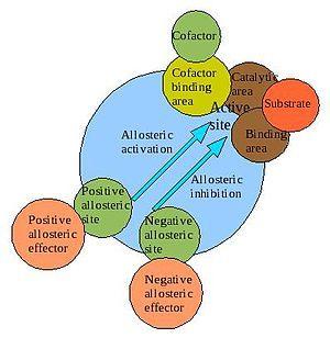 Allosteric regulation - Wikipedia