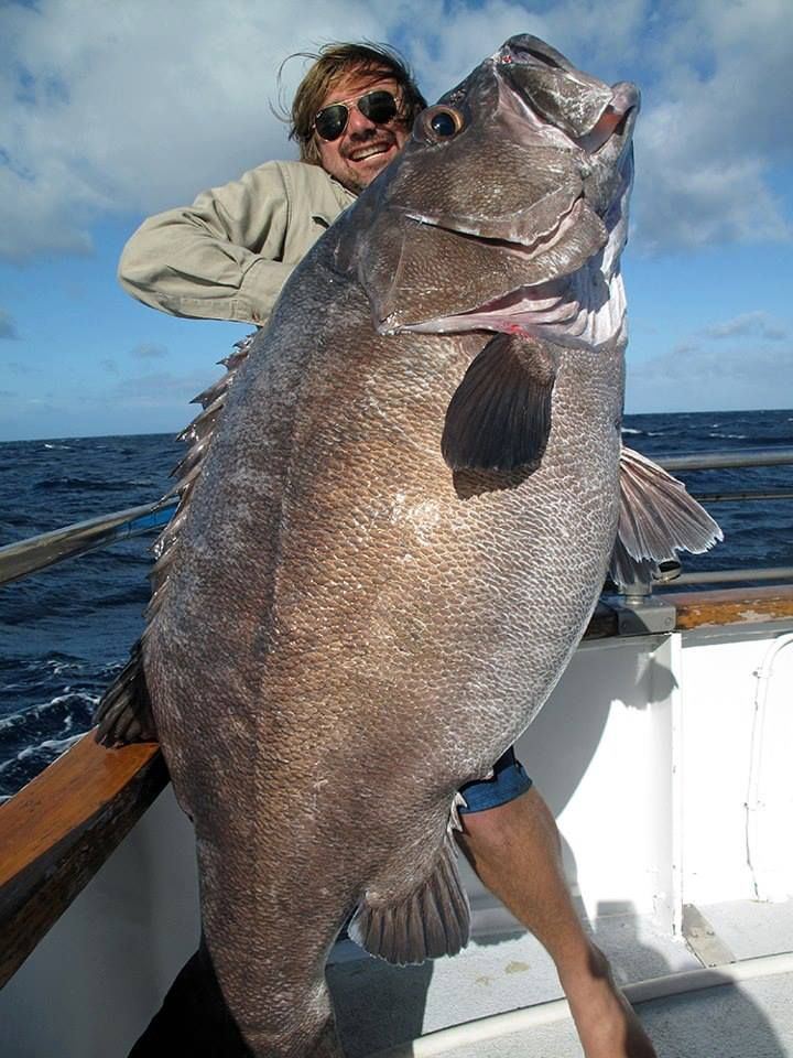 243 best images about big fish caught but not by me on for Coolest fish in the world