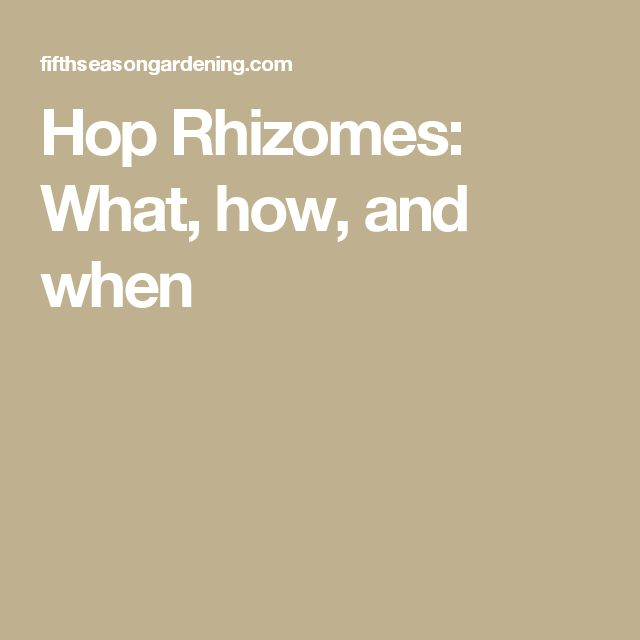 Hop Rhizomes: What, how, and when