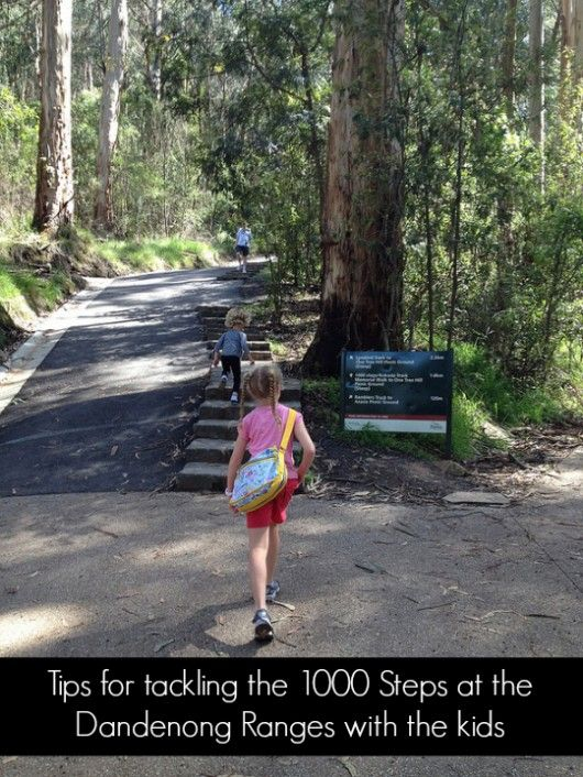 Tips on taking kids to the 1000 steps in the Dandenong Ranges A beautiful national park in Victoria, Australia