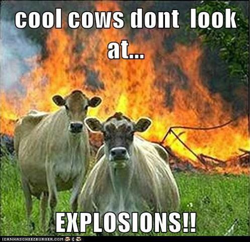 Look at these cool cows.