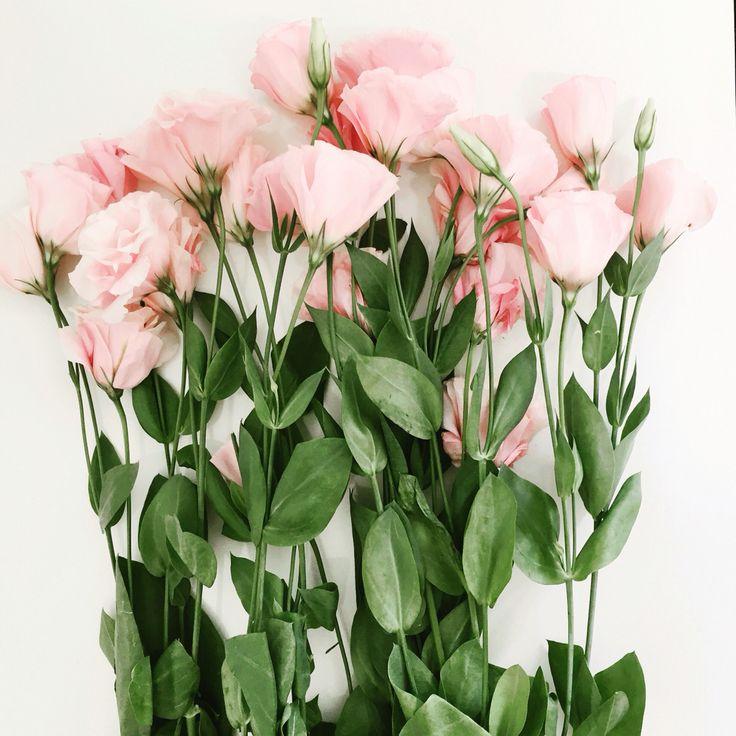 die besten 25 lisianthus flowers ideen auf pinterest h keln bouquet lisianthus. Black Bedroom Furniture Sets. Home Design Ideas