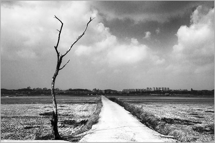 나무와 길 : 네이버 블로그