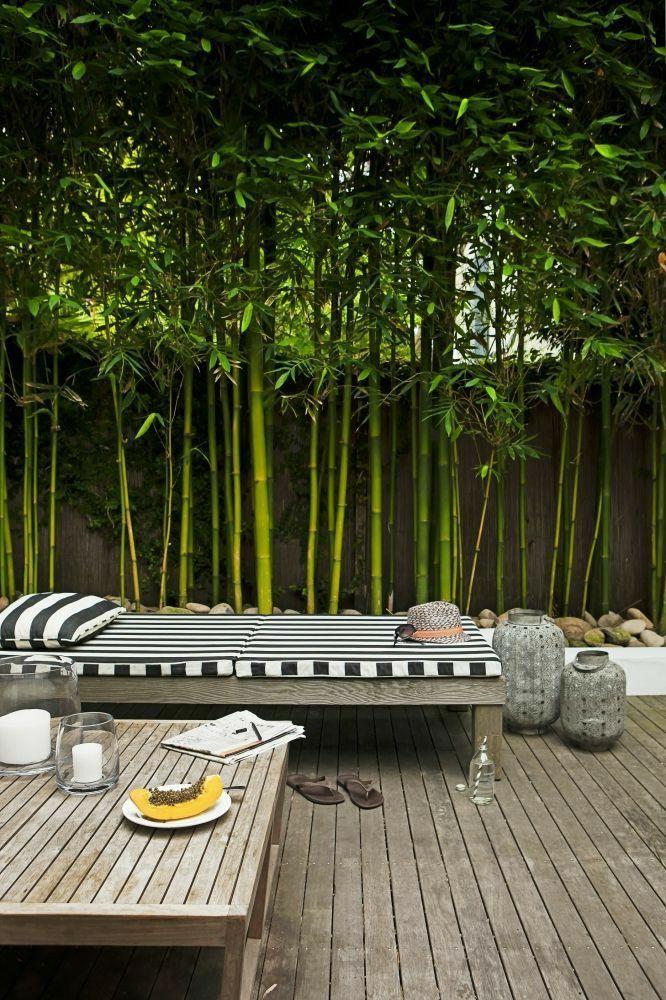 Pin By Anne Pesse On Decoracion De Patio In 2020 Bamboo Garden Fences Backyard Fences Backyard Landscaping