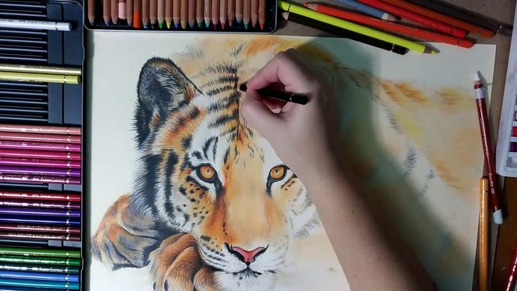 Tiger drawing Timelapse Part 2