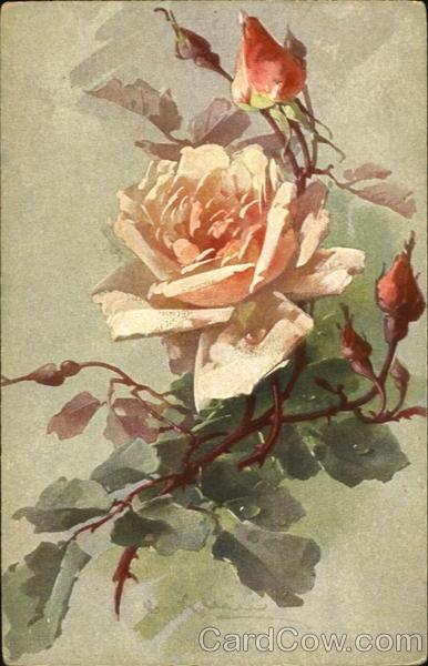 Pink Roses ~ C. Klein