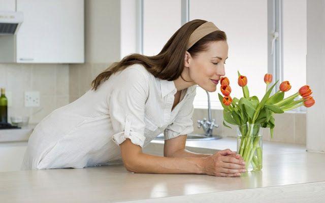 Nikolnews: Αυτά είναι τα φυτά που καθαρίζουν τον αέρα του σπι...