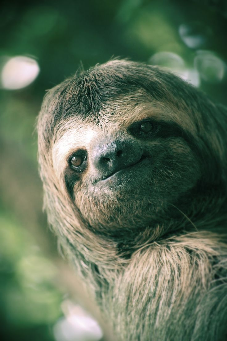 smiling sloth | All God's Critters | Pinterest