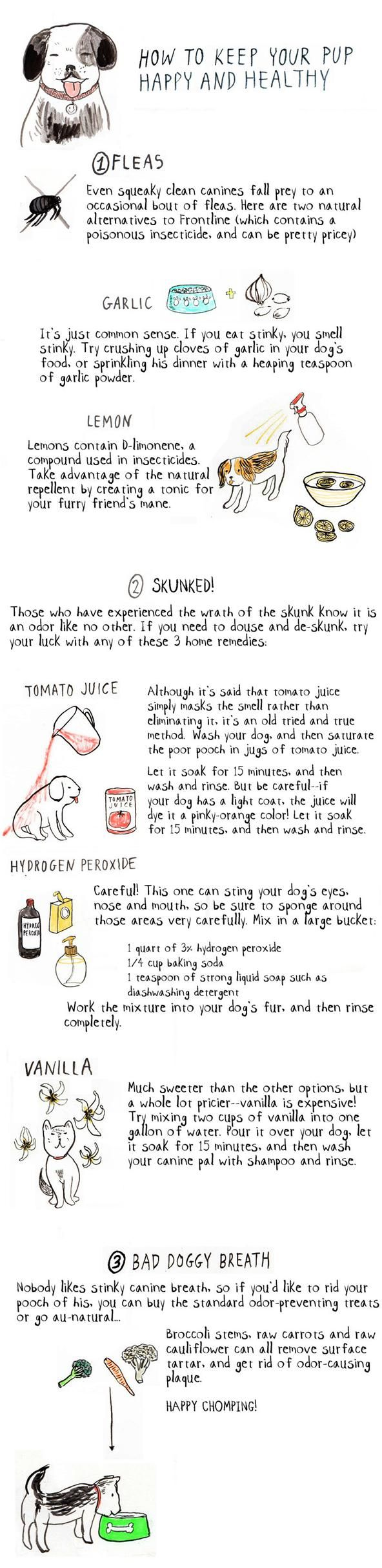 """They don't refer to them as """"man's best friend"""" for nothing. Your dog can be your best pal and least judgmental confidante, so make sure you take good care of him or her! When the occasion arises (which is hopefully never), follow the three home remedies below for treatment of fleas, bad breath, and skunk smell—you may even save a few pennies in the process. Don't Miss: 3 Easy Homemade Dog Treats Recipes for Your Pooch Don't Miss: 12 People Foods Dogs Should Eat for ..."""
