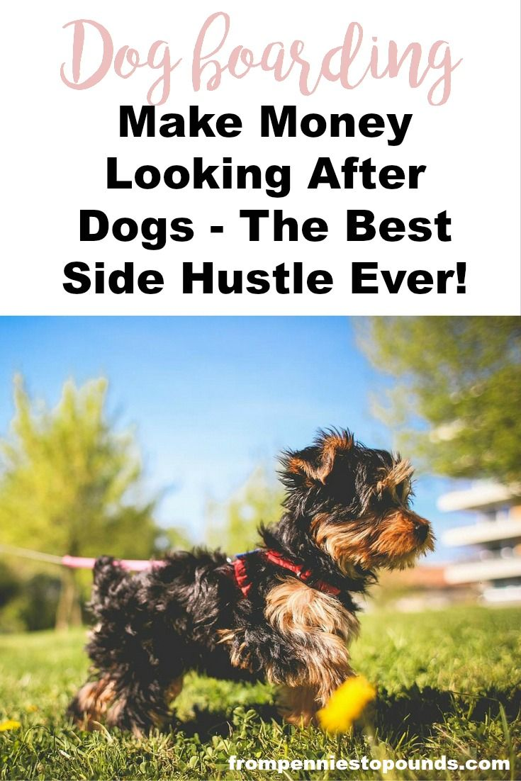 Make extra money with this fun side hustle: http://www.frompenniestopounds.com/love-animals-heres-money-making-idea/ Budgeting Tips | Save | Finance | Credit Card Debt | Financial Resources | Save more | Budget Help | Mum life | Frugal living | Debt Free Living | Money Management | Saving Tips