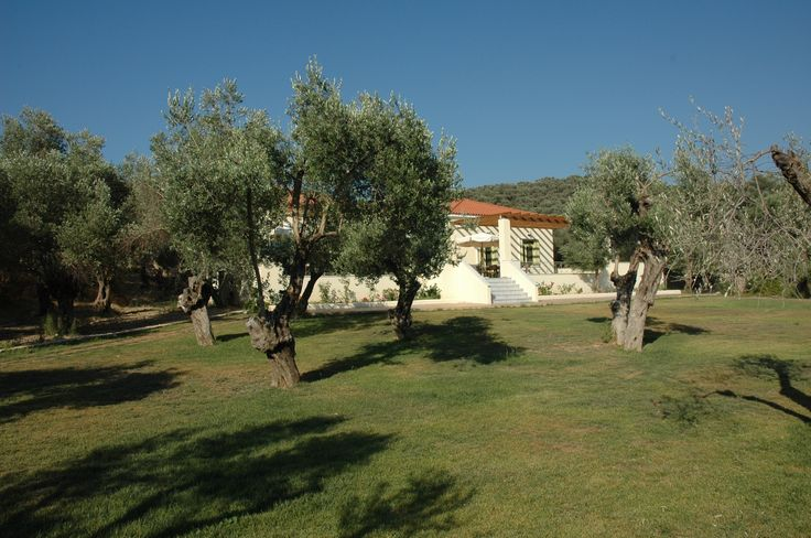View of the Gera's Olive Grove ESTATE