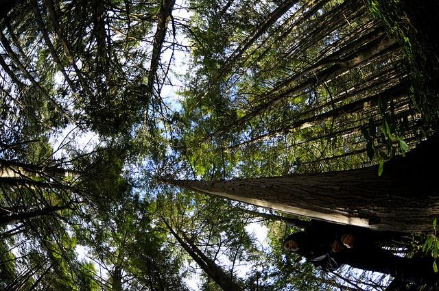 Hiking the Rainforest Trail in Tofino, British Columbia, Canada