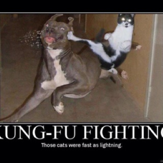 Kung fu fighting!