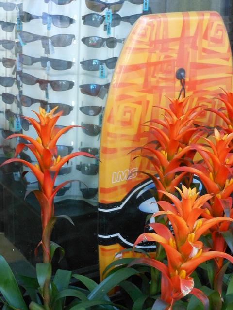 Sports Eyewear Display flowers and surfboard integrated into window display #merchandising