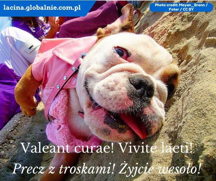 Sentencje łacińskie o szczęściu. http://lacina.globalnie.com.pl/sentencje-lacinskie/ #łacina #sentencjełacińskie #cytaty #sentencje