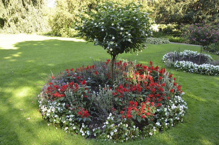 17 best images about gardening on pinterest trees and for Small trees for flower beds