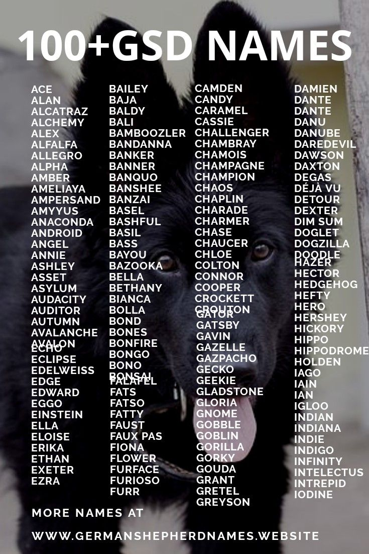 100 Black German Shepherd Names German Shepherd Names Black