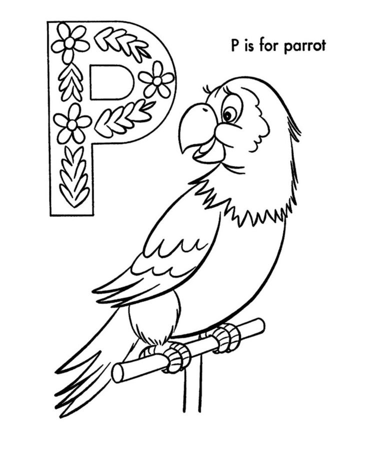 Parrot Coloring Pages Bird coloring pages, Pirate