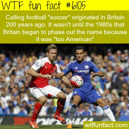 1000 Ideas About Funny Football On Pinterest: WTF Facts : Funny, Interesting & Weird Facts