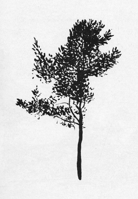 all_drawings: Пётр Васильевич Митурич (1887-1956гг).