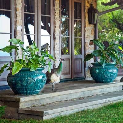 Peacock-colored ceramic pots flanking French doors add a splash of color and attract...a peacock!   Photo: Jennifer Cheung   thisoldhouse.com