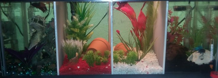 17 best images about betta fish guide crafts tanks on for Split fish tank