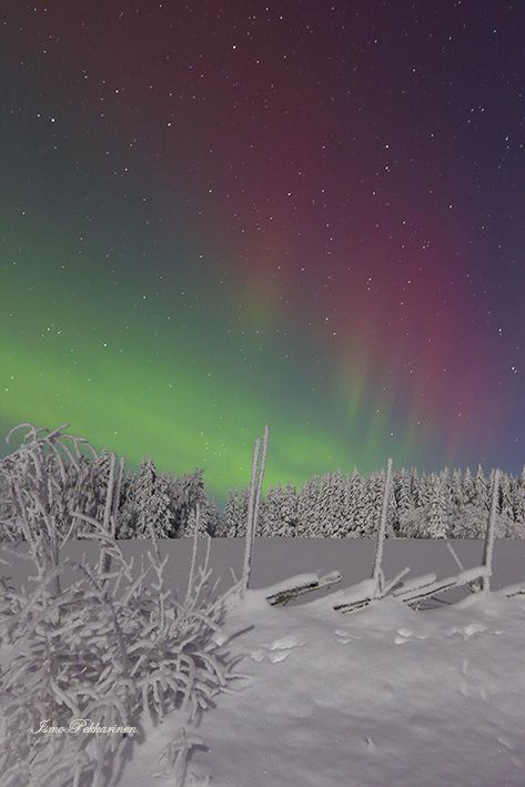 Revontulet Joensuu Heinävaara tammikuu,Northern Lights Joensuu Heinävaara Finland january.Photo Ismo Pekkarinen. #finland #luonto #aurora borealis #talvi #maisema #nature #northernlight #winter #landscape #joensuu