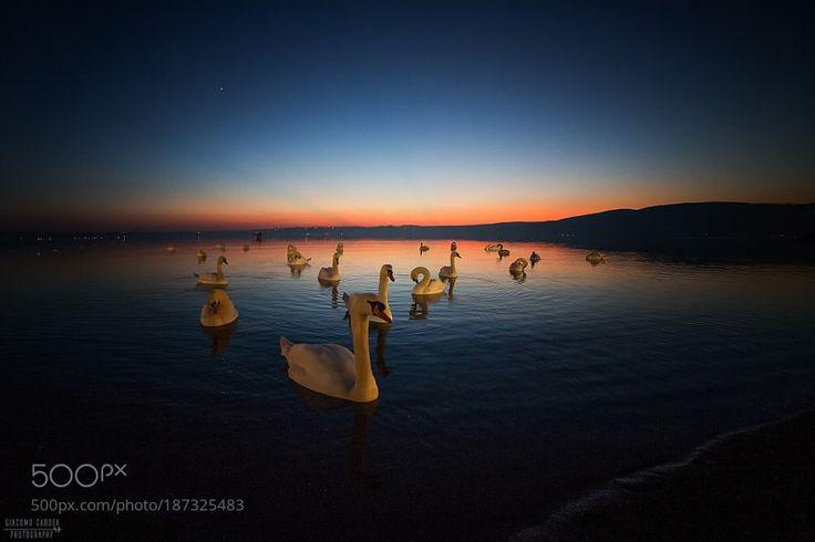 Il lago dei cigni by GiacomoCardea via http://ift.tt/2hhB4Ce