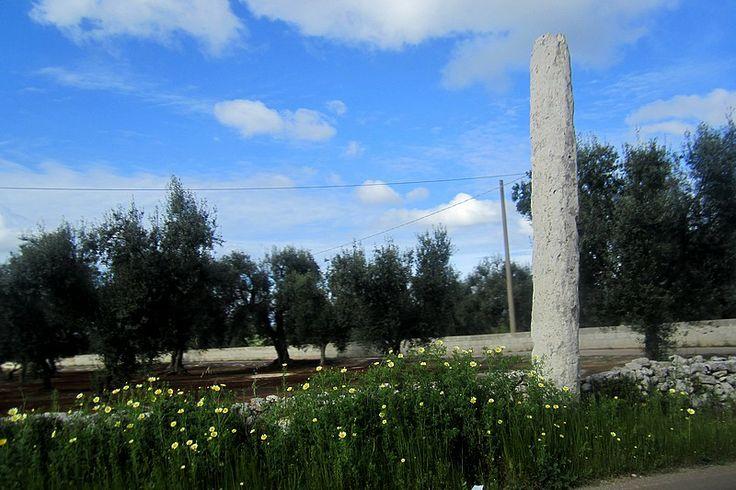 Salento di Puglia: Ulivi benedetti