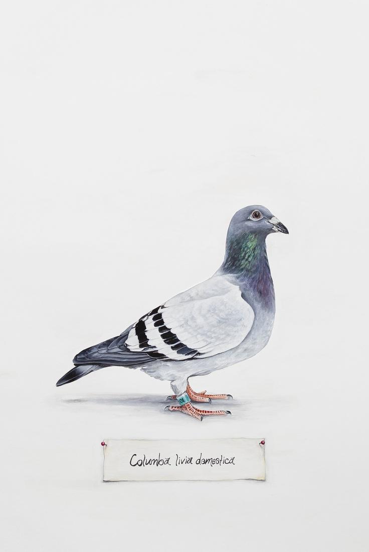 Bailey Harberg, #Pigeon, watercolor on paper. #bird #art #watercolor