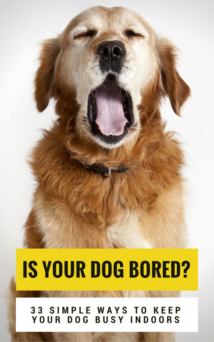 Is your dog bored? Here's a list of 33 simple ways to keep your dog busy indoors. via @jenjelly