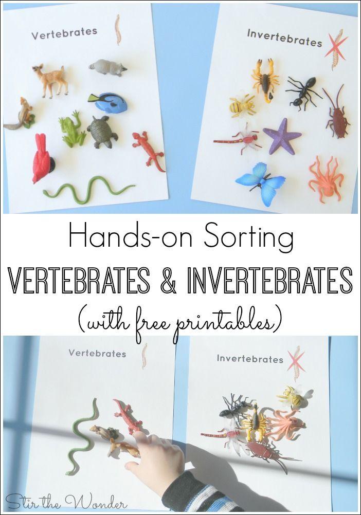 Vertebrateinvertebrate on Vertebrates Vs Invertebrates Picture Sorting Cards Montessori Printables